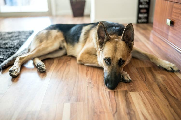 6 Best Flooring for Dogs