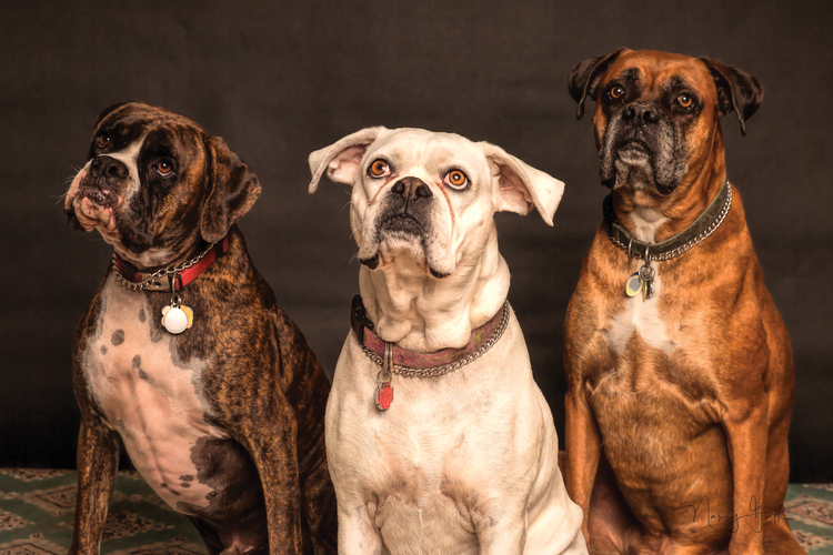 Best Flea Collar for Dogs