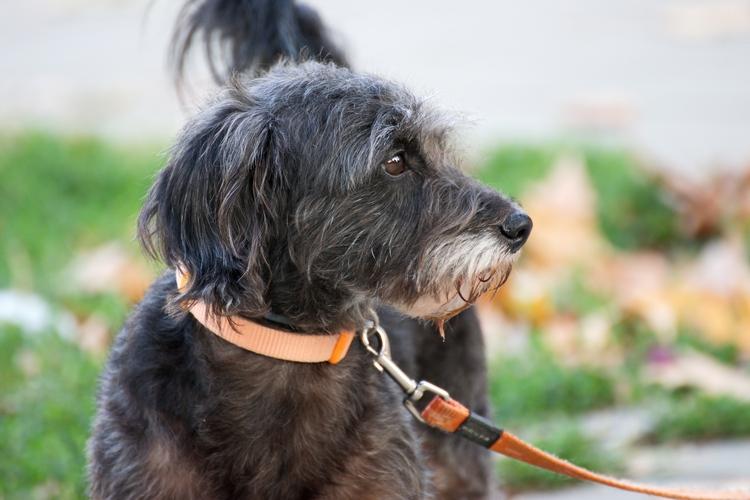 Safest Flea Treatments for Dogs