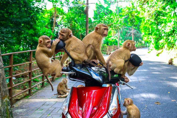 Is Adopting a Pet Monkey a Good Idea?