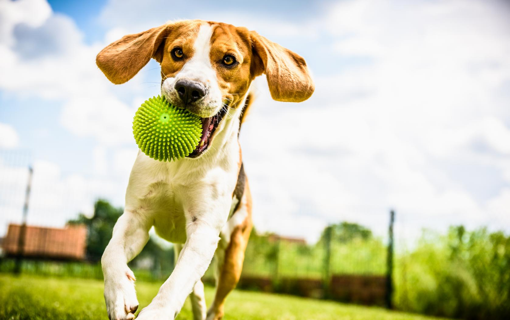 15 Ways to Make a Your Dog Happy