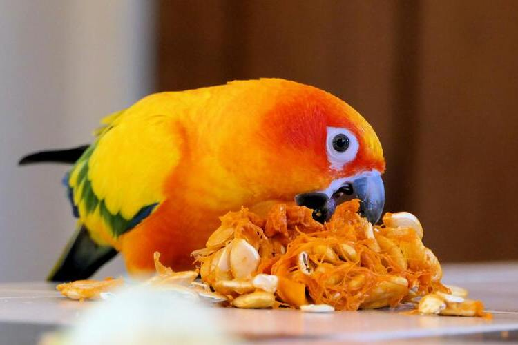 Pet Parrots Safety Tips