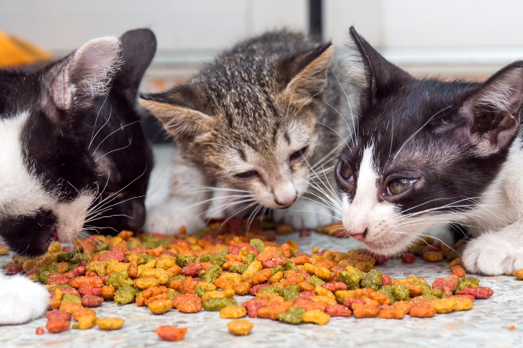 Best Cat Food for Kittens Healthy Growth