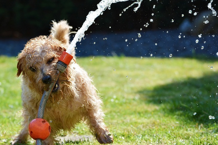 How to Trick your Dog into Drinking Water