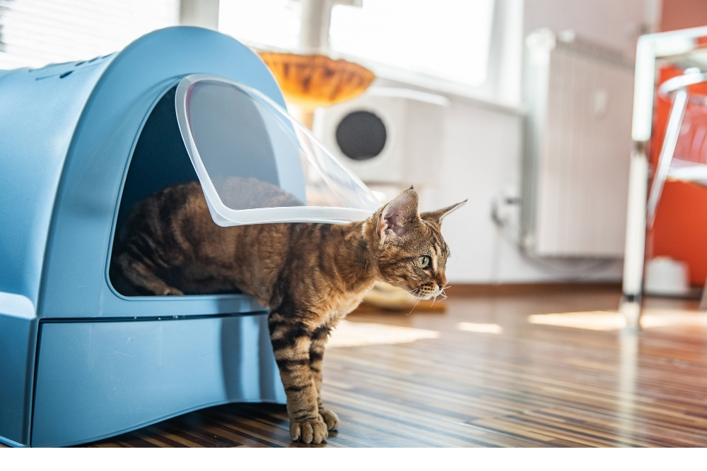 How to Get Rid of Litter Box Smell